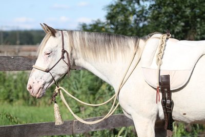 SET - Natural hackamore - Touwhalster, teugels & leadrope in 1
